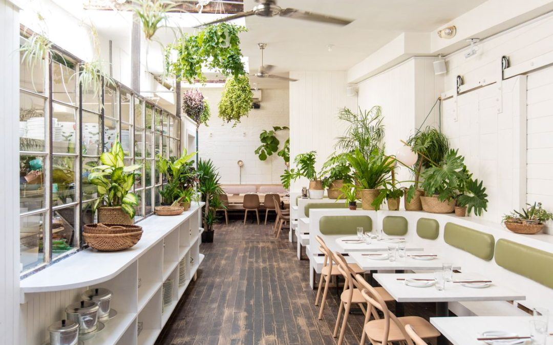 Using Plants to Attract More Customers