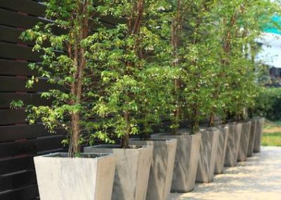 plant rental for hotels