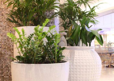 shopping mall plant rental